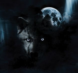 Scary Black Wolf hides and manipulates you to self sabotage
